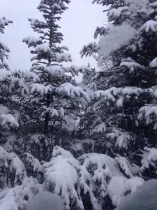 snowdec1